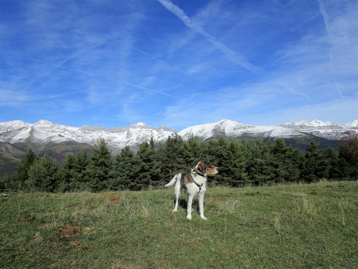 Oto - Yosa - Fragen - Broto - Oto. Recorrido circular por el valle de Broto.
