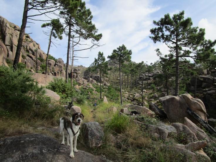Subida al Monte Pindo. Primer tramo de pinar.